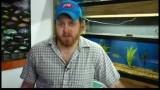 Pet Fish Care : Mail Order Fish Supplies
