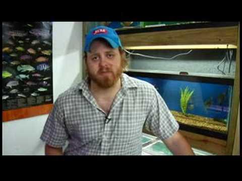 Pet Fish Care : Where Can I Buy Cheap Aquariums?