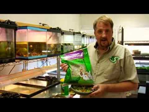 Pet Turtle Care : Turtle Food Facts
