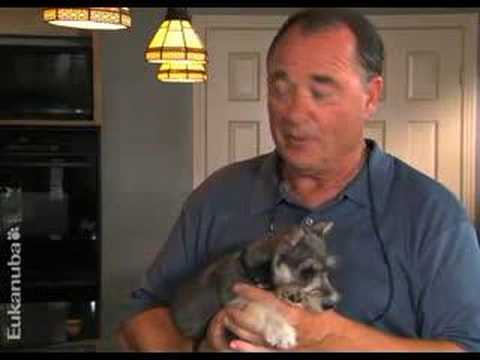 Puppy Training Video – Welcome Home New Puppy (Episode 2)