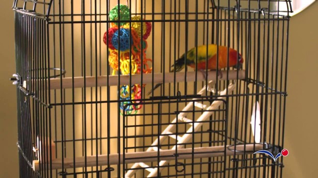 Setting Up a Safe and Comfortable Bird Cage