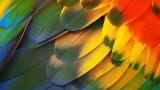 Should You Clip Your Bird's Wings? | Pet Bird