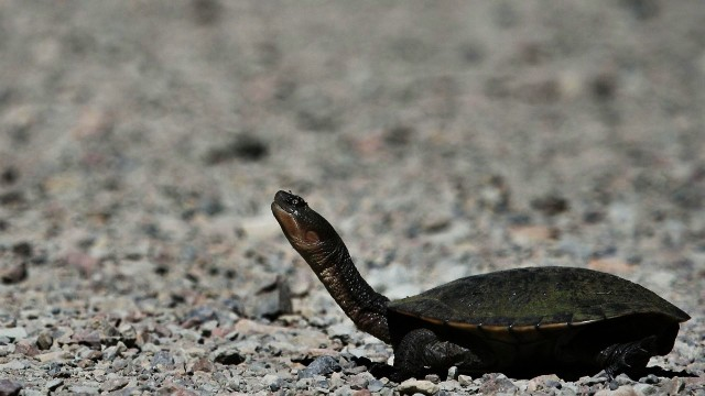 Symptoms of Turtle Disease | Pet Turtles