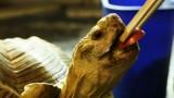 Turtle Feeding Tips | Pet Turtles