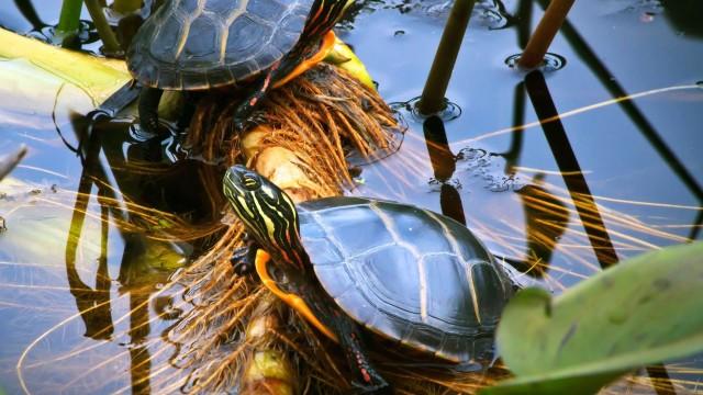 Turtle Terrarium Tips | Pet Turtles
