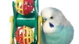 What Are the Best Bird Toys? | Pet Bird