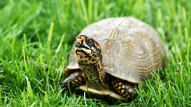 What's a Forest Turtle?   Pet Turtles