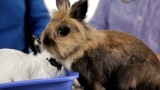 Why It's Dangerous to Keep Rabbit Outside   Pet Rabbits